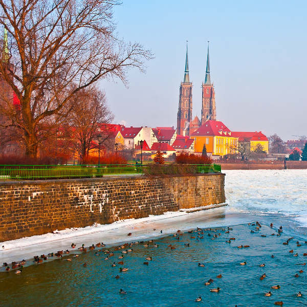 River Oder with Ducks Wroclaw