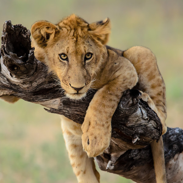 skukuza african wildlife