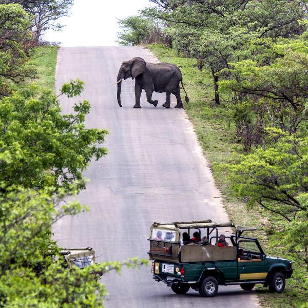 skukuza safari adventures