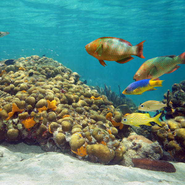 cozumel underwater landscape and wildlife