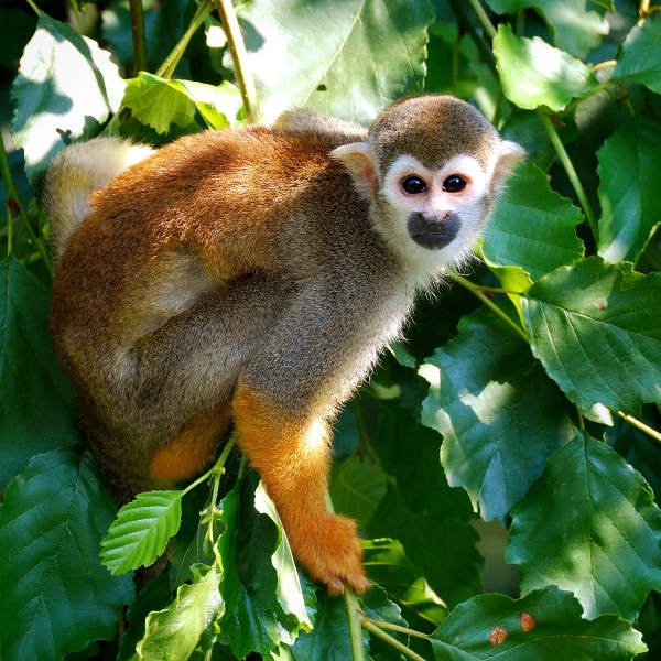 monkey-tropical-managua