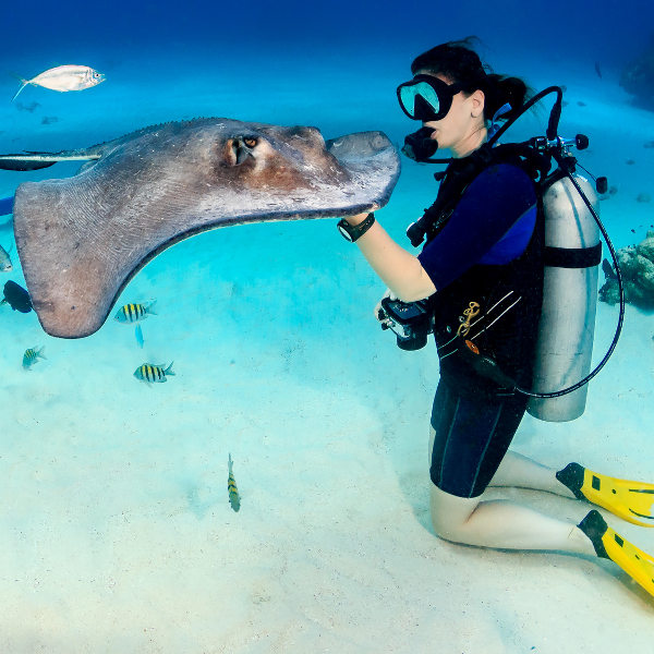 scuba diver touching stingray