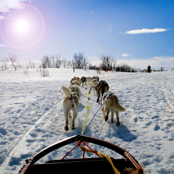 anchorage-dog-sledding