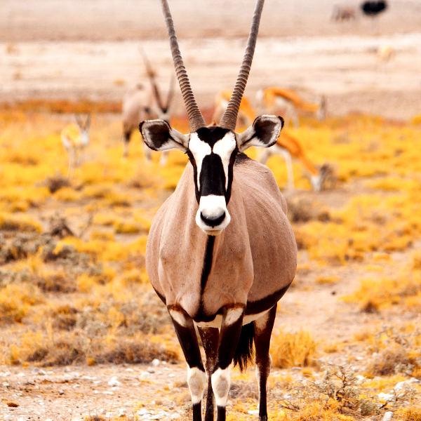sishen kalahari desert