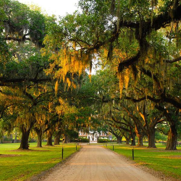 charleston-plantation-picturesque