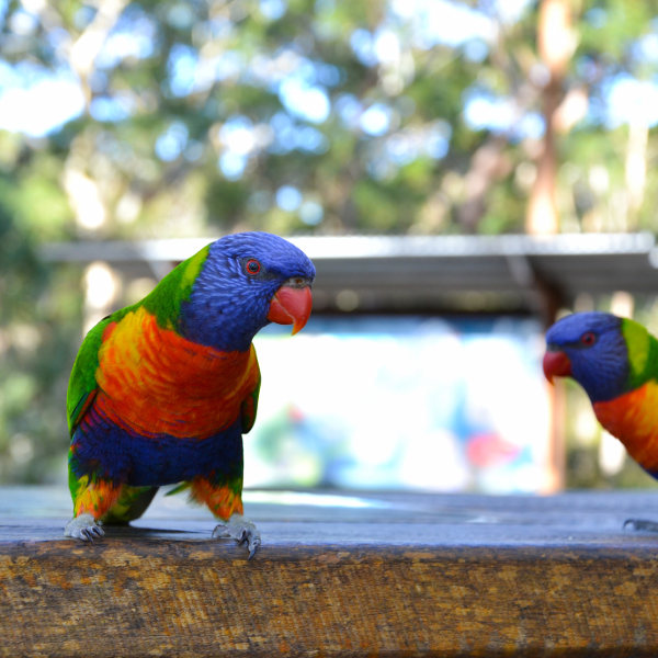 albuquerque colourful biological park birds