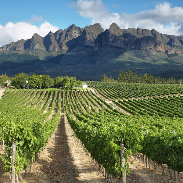 Wellington Wine Farm Cape Town