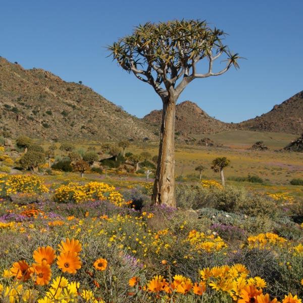 Namaqualand Upington
