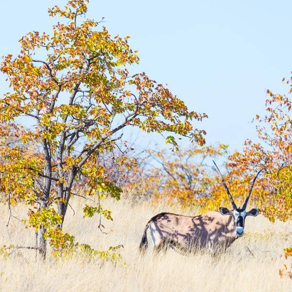 Mapungubwe National Park Polokwane