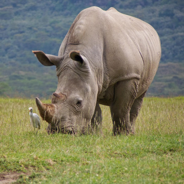rhino-national-park-bulawayo