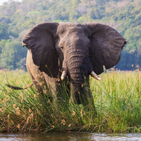 elephant-reserve-maputo