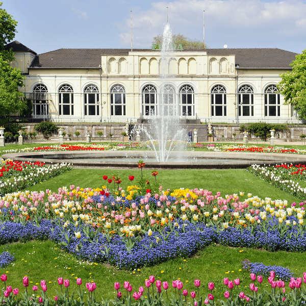 water fountain plants