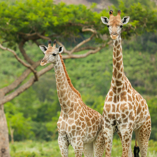 wildlife-harare-zimbabwe