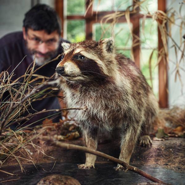 wild-animals-winnipeg-museum
