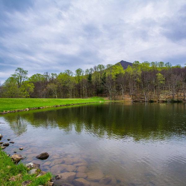 lake green grass