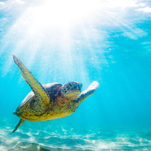 marine-life-st-thomas