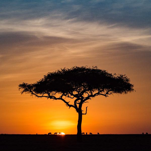 Antelope Landscape Blantyre