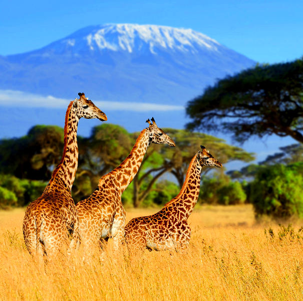 tanzania magical safaris