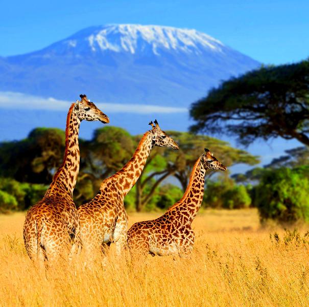 Discovery Kenya Safari-7 Days