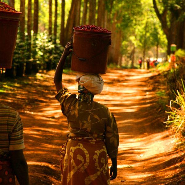 uganda ugandan culture