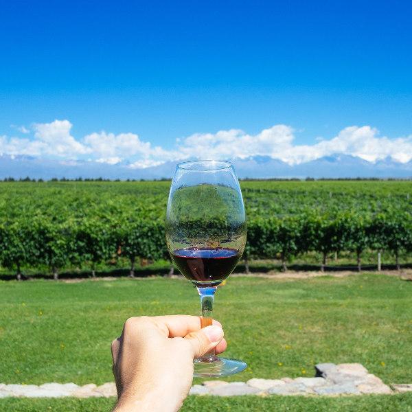 Argentina Wine