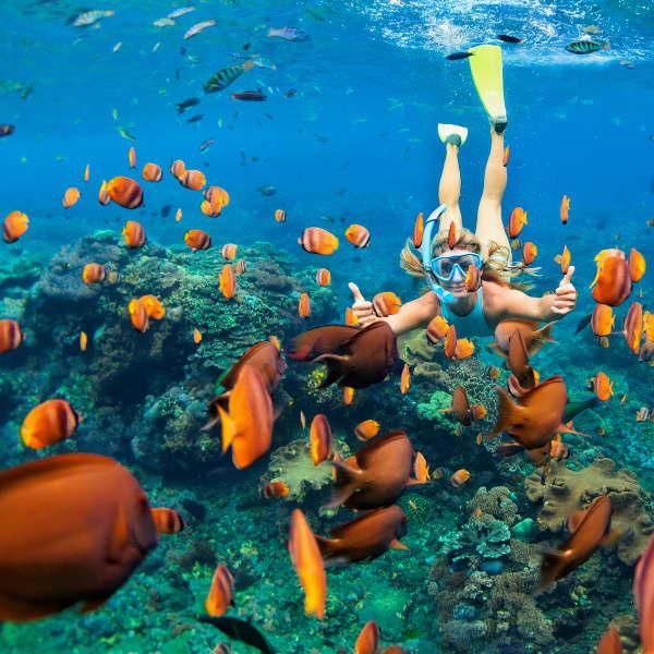 snorkelling-bahamas-marine
