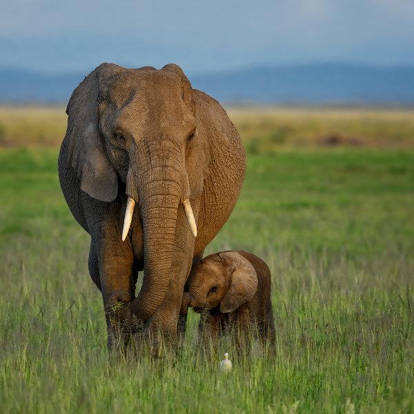 wild-nature-burundi
