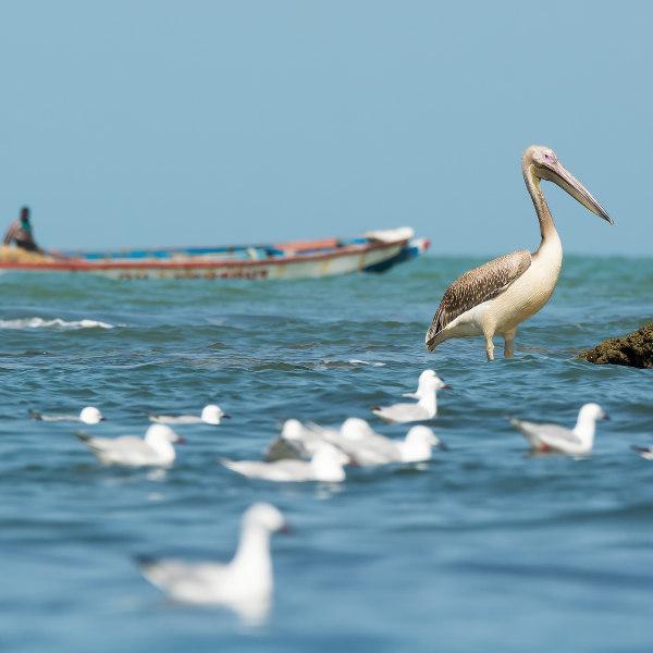 guinea-sea-life