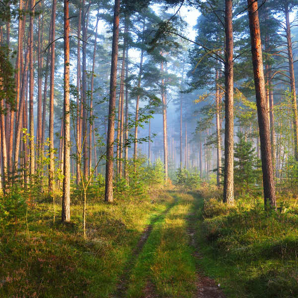 natural-forests-latvia