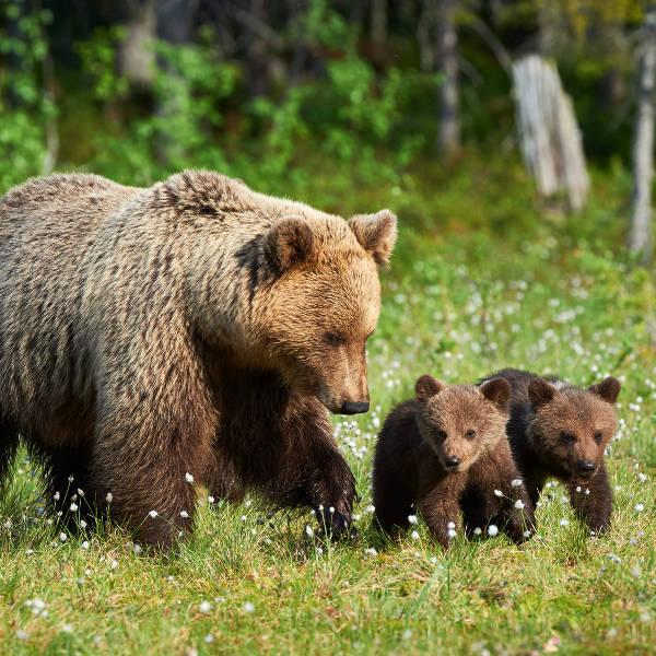 Finland Wildlife
