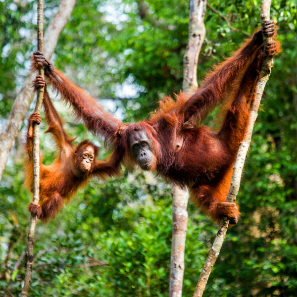 borneo exotic wildlife