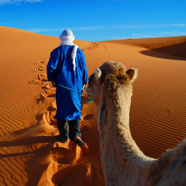 mauritania unique safaris