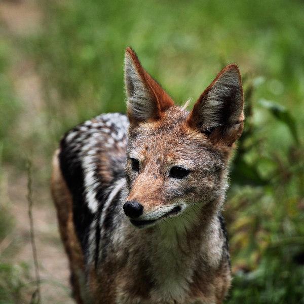Djibouti Wildlife