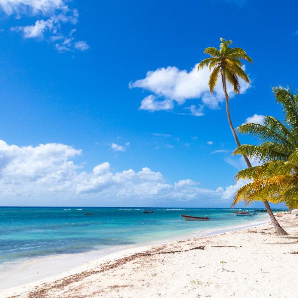 palm tree beach