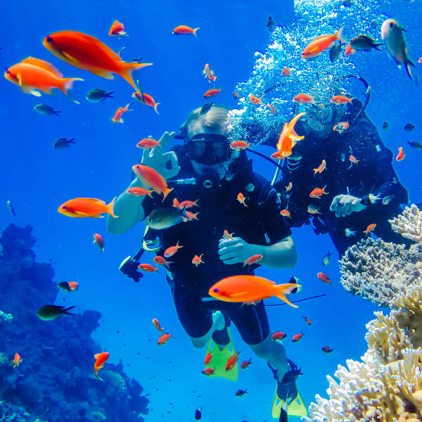 aqaba-red-sea-diving