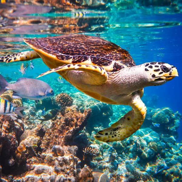 Sint Maarten Wildlife