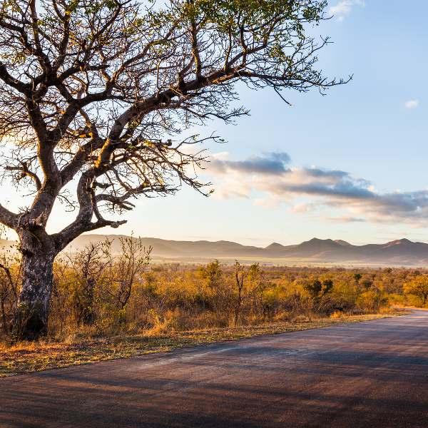 Kruger National Park Scenery