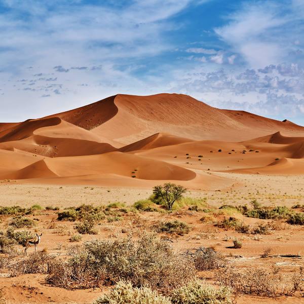 desert blue sky