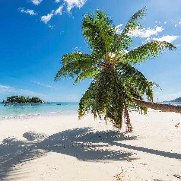 daydream-beaches